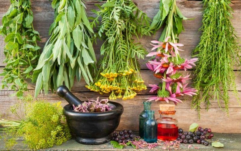 Βότανα και θεραπείες