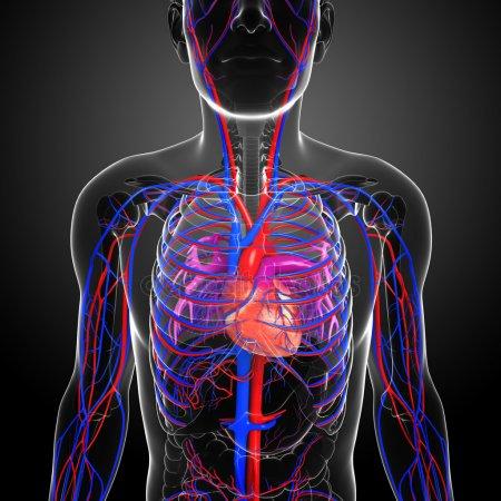 Καρδιά-Κυκλοφορικό